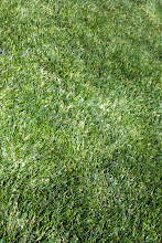 Photo: Grant got the grass. I like the color