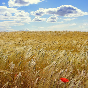 summer 1 by Victor Pavel - Landscapes Prairies, Meadows & Fields ( ... )