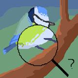 Ois - Reconnaissance des oiseaux
