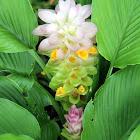 Jewel of Thailand