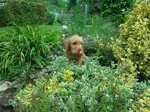 Photo: Aron im Garten