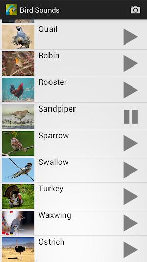 Bird Sounds screenshot 13