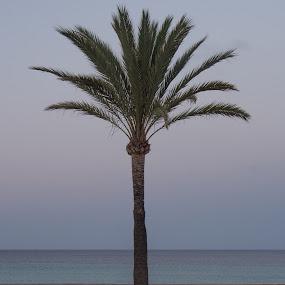 palm and bench by Morten Gustavsen - Landscapes Travel