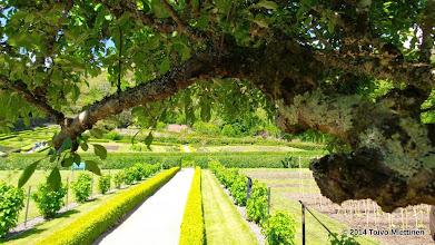 Photo: Luostarin puutarhassa.