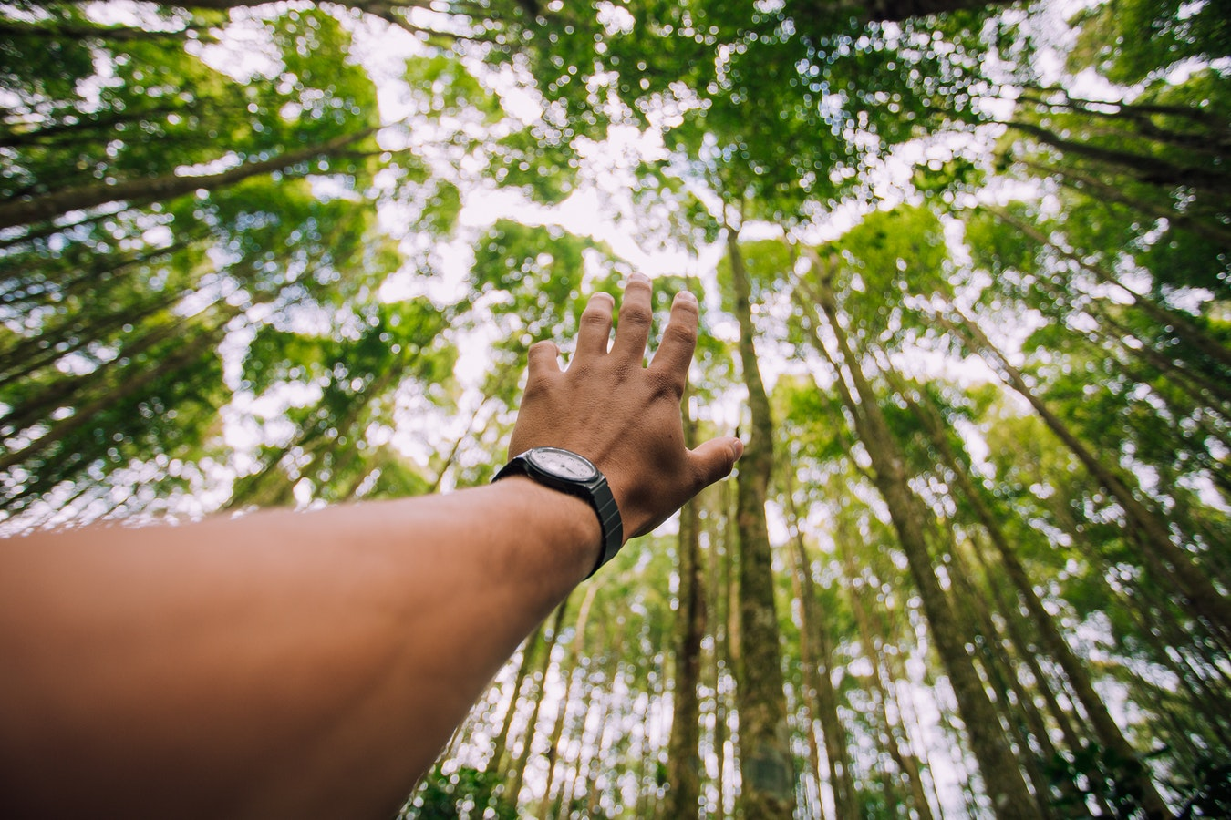 Hand reaching toward trees in Bali, Indonesia; outdoor watches for travel