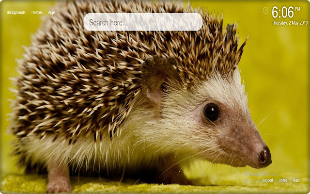 Cute Hedgehog HD Wallpaper New Tab