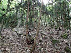 掘れた道が続くが倒木が邪魔
