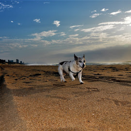 by Orpa Wessels - Animals - Dogs Running (  )