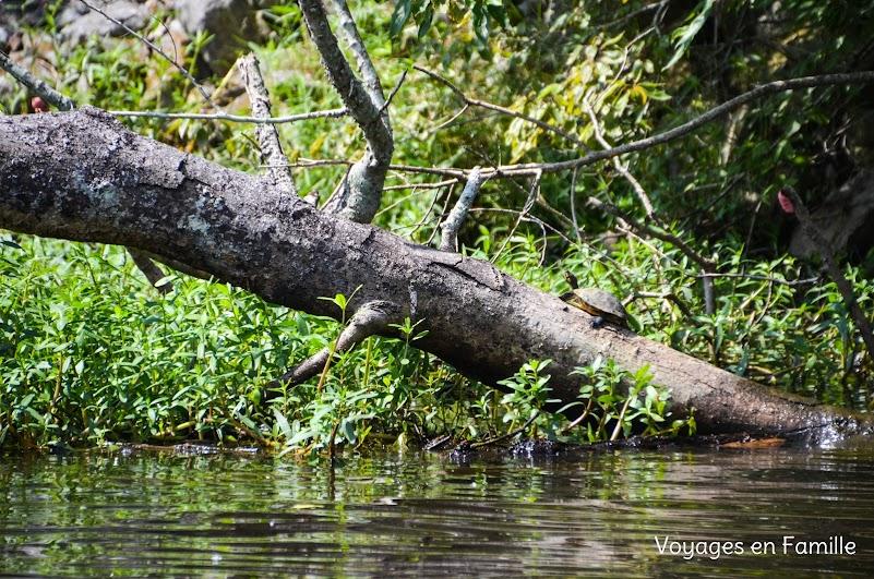 Tortoise Swamp tour