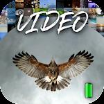 Video Wallpaper 2K 3.7.1