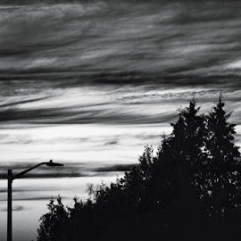 Pole and trees  by Todd Reynolds - Black & White Landscapes