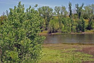 Photo: Freeway Pond