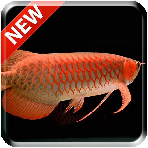 New Arowana 3D Live Wallpaper