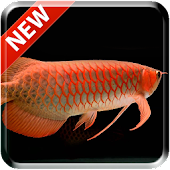Tải Game New Arowana 3D Live Wallpaper
