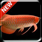 Tải New Arowana 3D Live Wallpaper miễn phí