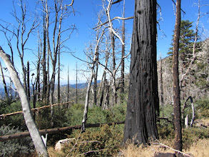 Photo: View south from Windy Gap Trail amidst Curve Fire damage 10 years later