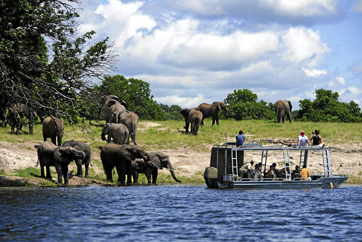 A tender boat takes tourists to the banks of the Chobe National Park which boasts one of the densest populations of elephants on the African continent - estimated at approximately 120,000.