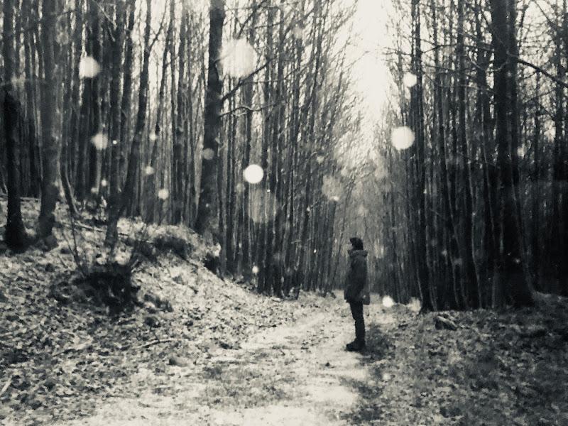 Silenziosi pensieri di polecat