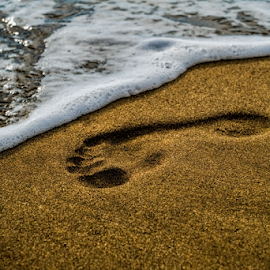 Footprint on the sea beach by Roberto Sorin - Nature Up Close Sand ( shore, freedom, relax, foot, tropical, ocean, footprint, travel, seaside, beach, sandy, landscape, coastline, coast, footstep, nature, sunny, path, alone, footsteps, barefoot, water, sand, seashore, peaceful, track, romantic, journey, sea, mark, print, holiday, footprints, vacation, sunset, background, outdoor, wave, summer, walk, step,  )