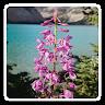 com.pinkpointer.jigsaw.flowers