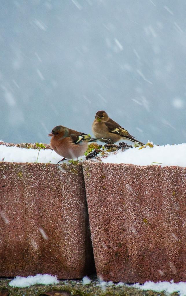 Sotto la neve di borgio