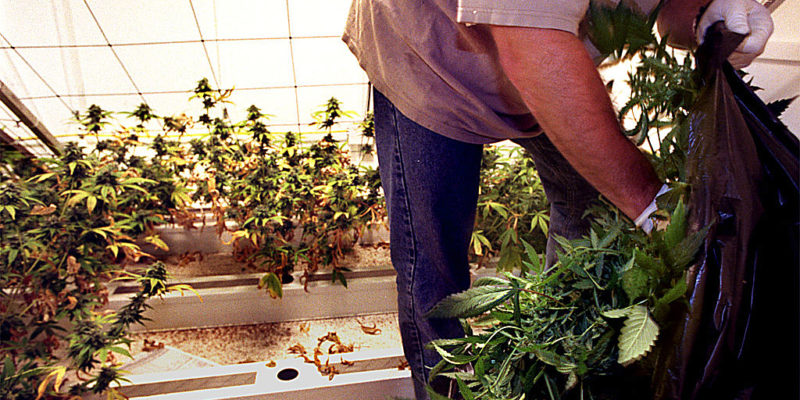 $600,000 of Cannabis Stolen in San Francisco Dispensary Burglary