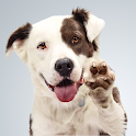 Pet Passport icon