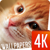 Cats Wallpapers 4k