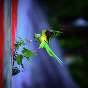 Fly by Nayan Shaurya - Animals Birds ( #wings, #flap, #bird, #birds, #feather, #parrot )