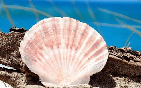 Seashell Photo frame - náhled