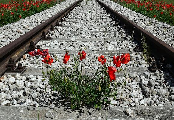 Arriva il treno? di Diana Cimino Cocco