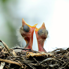 Where's Mama by Ruth Overmyer - Animals Birds (  )
