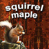 squirrel maple