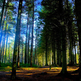Forest Sunlight ... by Ian Cormack - Nature Up Close Trees & Bushes