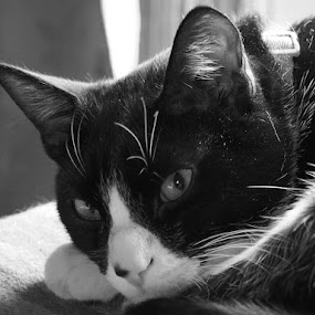 Freddy by Renee LaFlesh - Black & White Animals (  )