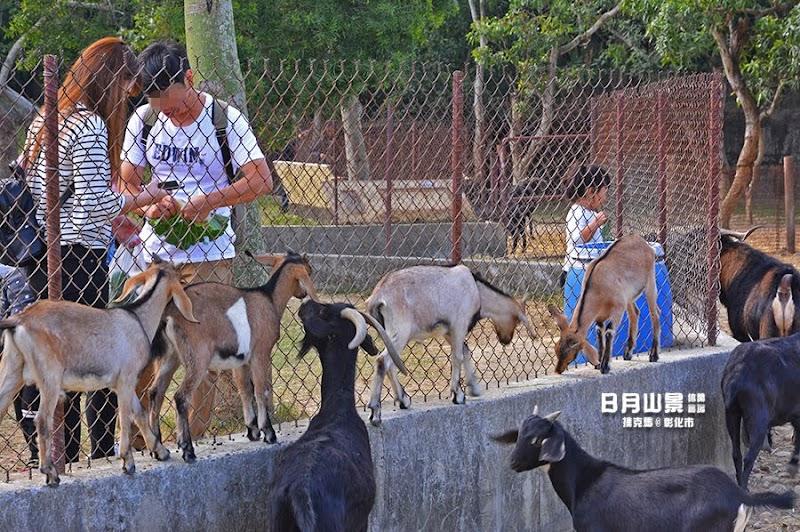 日月山景休閒農場可愛動物區