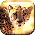 slow motion cheetah Live WP icon