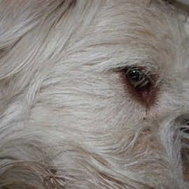 by Jon Crow - Animals - Dogs Portraits
