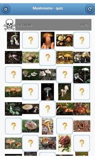 Mushrooms - quiz