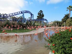 Photo: Flamingos