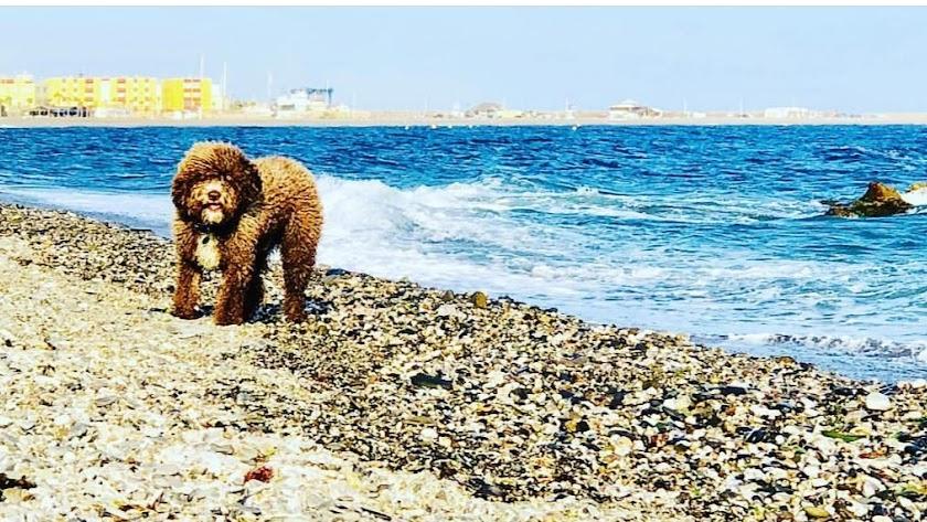 Además de esta, en Andalucía sólo existen otras dos playas con la misma denominación.