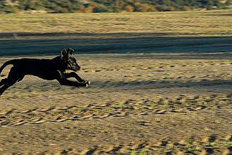 Photo: l'Estall cadell volant pels camps de l'Hereuet