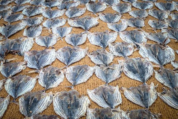 Dry fish di Simona Ranieri