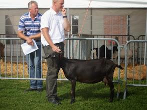 Photo: Klasse 2: 1 jarige bonte geiten. 1b. Kolly v/d Oude schuur.