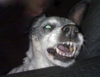 Ira canina di Daiana90