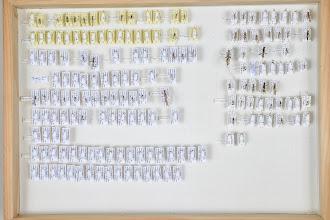 Photo: ZSM-HD-0001350 Various ichneumonids (leg. Andreas Floren)
