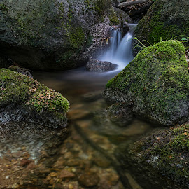 Monthly spring by Martin Namesny - Nature Up Close Water ( moss, light, stream, stones, source, water )