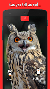 Owl or Penguin? - náhled