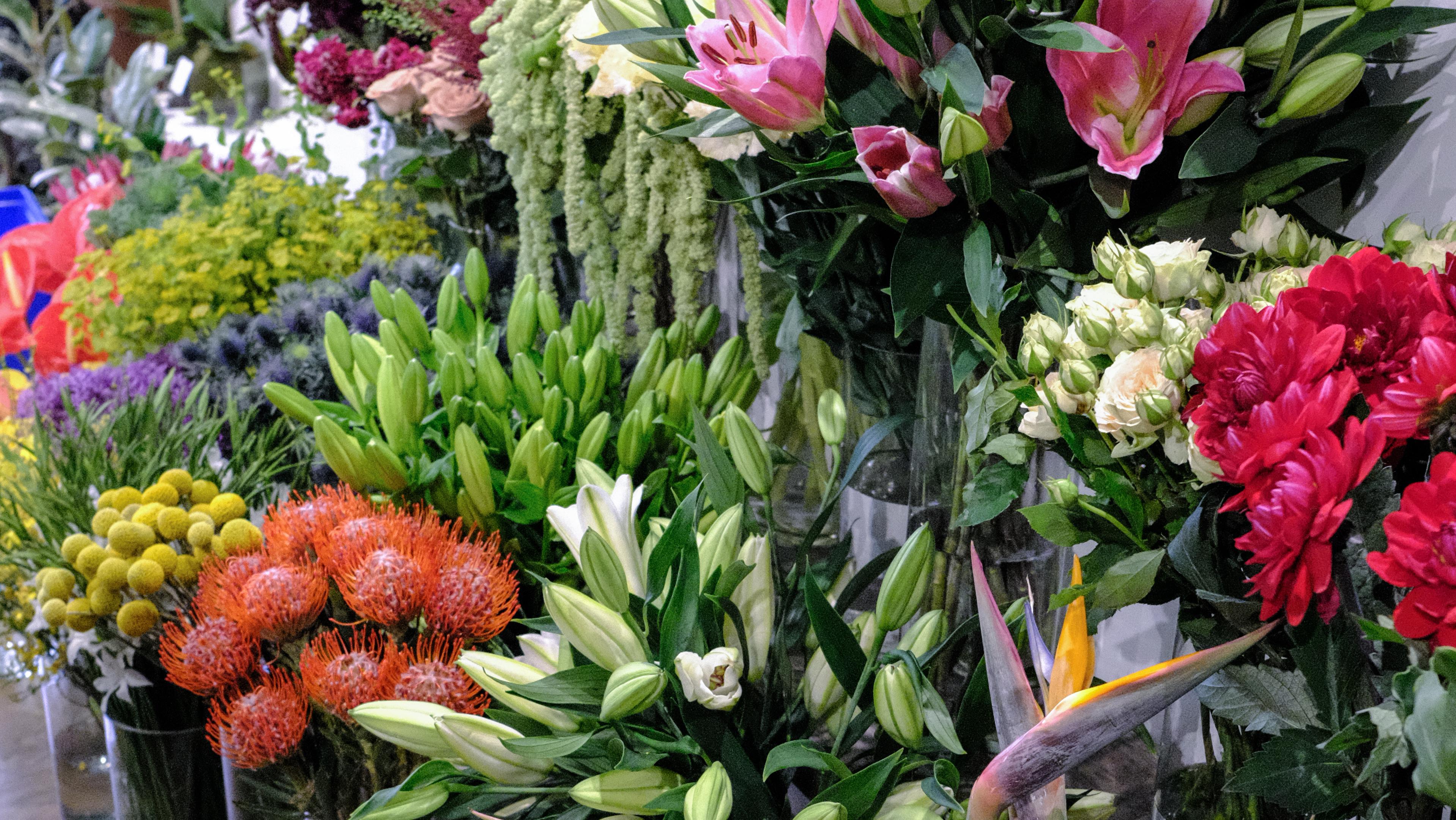PlantShed New York Flowers image