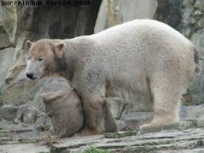 Photo: Knut klemmt sich das Teil einfach zwischen die Tatzen ;-)